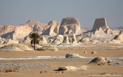 AI helpt aantal bomen in de Sahara in kaart te brengen