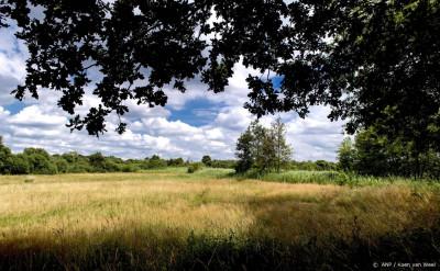 Brabant en Limburg waarschuwen via navi-apps voor recreatiedrukte
