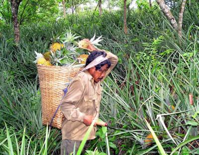 Maleisische onderzoekers bouwen drone van ananasbladeren