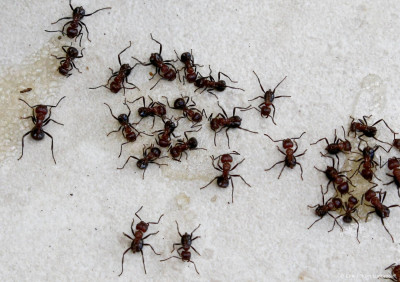 Nederlandse bedrijven bouwen mierenzuur-aggregaat